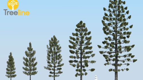 3dmk- TreeLine- Araucaria cunninghamii - Hoop Pine -MPR