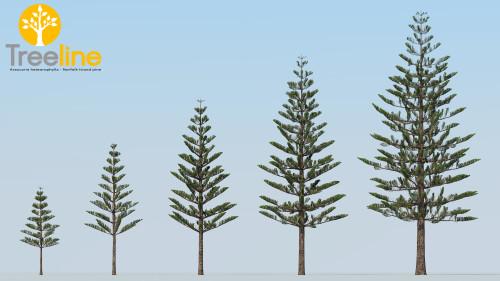 3dmk- TreeLine- Araucaria heteorophylla - Norfolk Island pine [MPR]