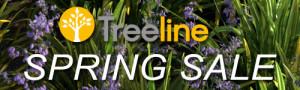 3dmk-Treeline-Spring Sale - Dianella