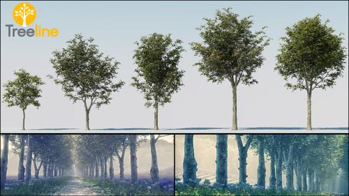 3dmk-TreeLine - Platanus x acerifolia - Platane