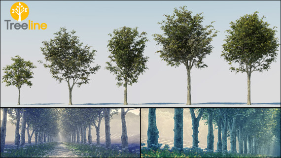 Platanus x acerifolia - Platane Tree