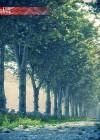 3dmk-TreeLine - Platanus x acerifolia - Platane ex2