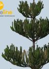 3dmk- TreeLine- Araucaria heteorophylla - Norfolk Island pine [PR]-03