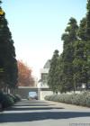 3dmk-TreeLine - Kauri Pine -Agathis robusta-EPR1