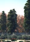 3dmk-TreeLine - Kauri Pine -Agathis robusta-EPR2 (0-00-00-00)