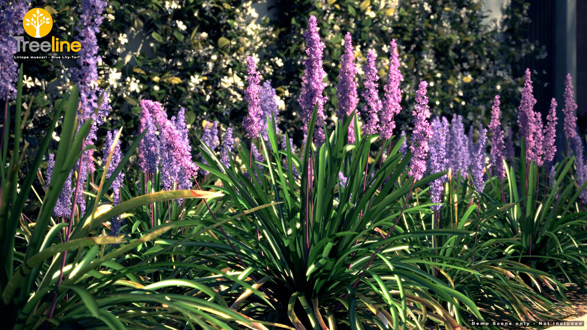 Liriope Muscari – Lily Turf | 3dmk