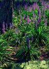 3dmk-Treeline-Liriope Muscari-Lily Turf-EPR3