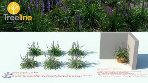 3dmk-Treeline-Liriope Muscari-Lily Turf MPR