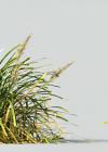 3dmk_Treeline_Lomandra-Longifolia