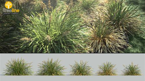 3dmk_Treeline_Lomandra longifolia_MPR