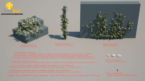 Trachelospermum jasminoides - Star Jasmine