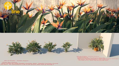 3DMK - TreeLine -Bird Of Paradise - Strelitzia ReginaeMPR