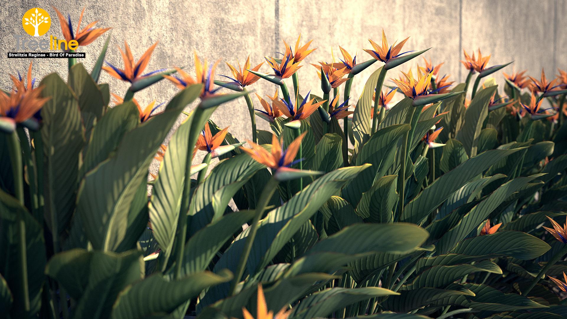 Strelitzia Reginae Bird Of Paradise 3dmk