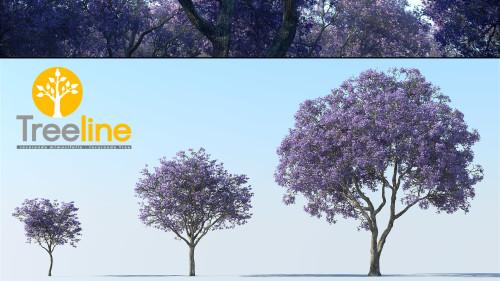3dmk-Treeline_Jacaranda mimosifolia_MPR