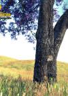 3dmk-treeline- Jacaranda mimosifolia_EPR2