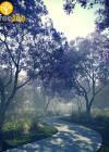 3dmk-treeline- Jacaranda mimosifolia_EPR3