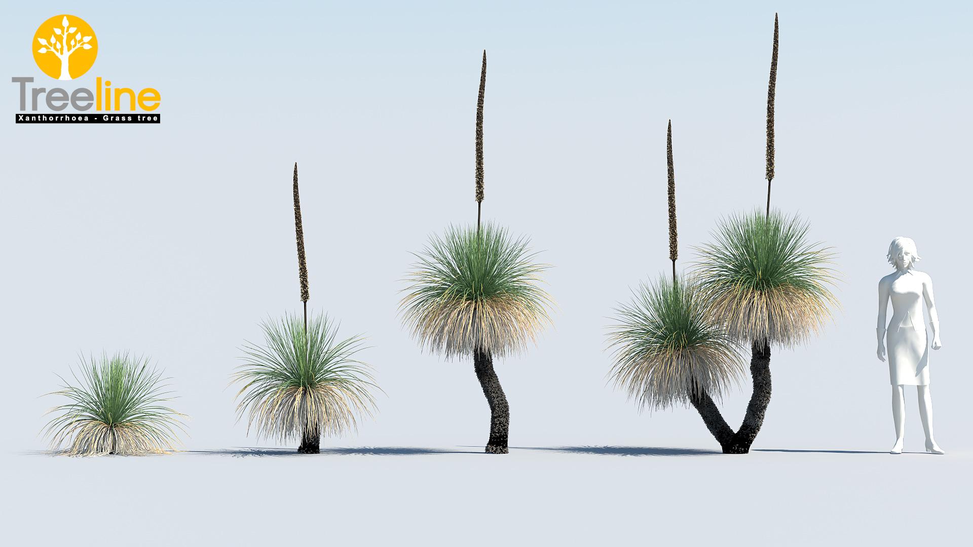 xanthorrhoea arborea  u2013 grass tree