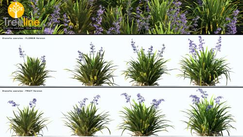 3dmk-Treeline-Dianella-caerulea_blue flax-lily_MPR