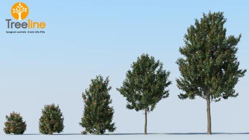 3dmk_Treeline_Syzygium australe -Creek Lilly-Pilly_MPR