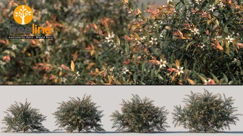 3dmk_Treeline_Austromyrtus_dulcis_MPR1