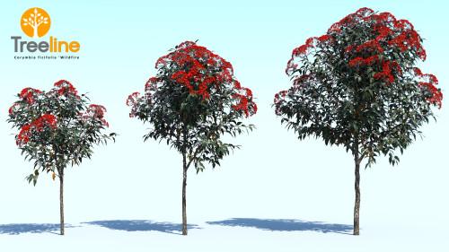 3dmk_Treeline_Corymbia_ficifolia_Wildfire_MPR1