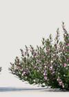 3dmk_Treeline_Crowea-Poorinda-Ecstacy-[exalata x saligna]_EPR2