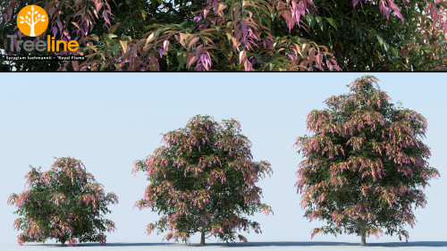 3dmk_Treeline_Syzygium luehmannii_Royal_Flame_MPR