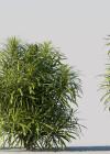 3dmk_Treeline_Codiaeum_variegatum_pictum_EPR1