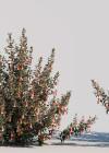 3dmk_Treeline_Correa_reflexa_EPR2