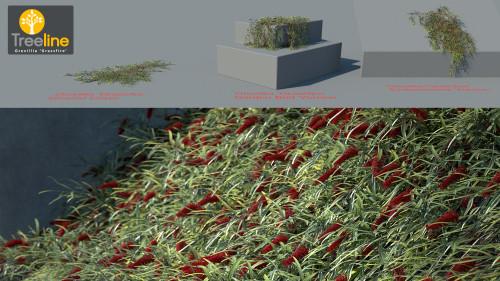 3dmk_Treeline-Grevillia_Grassfire_MPR