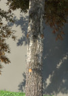 3dmk_Treeline_Quercus_palustris_EPR3
