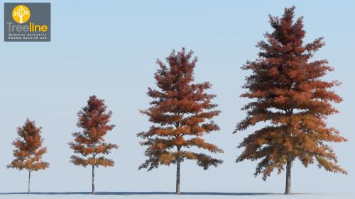 3dmk_Treeline_Quercus_palustris_MPR