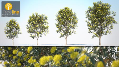 3dmk_treeline_xanthostemon-chrysanthus_golden_penda_mpr