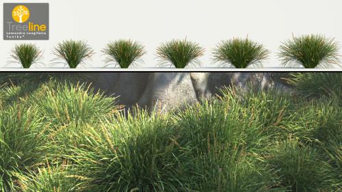 3dmk-Treeline_Lomandra_Longifolia_TANIKA_MPR
