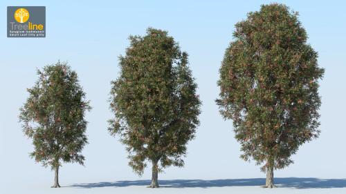 3dmk_Treeline_Syzygium_luehmannii_EPR1
