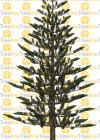 3dmk_Treeline_Araucaria-heteorophylla_2D_EPR2
