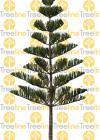3dmk_Treeline_Araucaria-heteorophylla_2D_EPR3