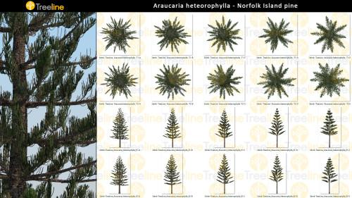3dmk_Treeline_Araucaria-heteorophylla_2D_MPR