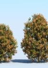 3DMK-Treeline-Acmena_hemilampra_EPR2