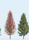 3dmk_Treeline_Pyrus_calleryana_Chanticleer-EPR1