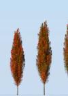 3dmk_Treeline_Quercus_palustris-Green Pillar_EPR2