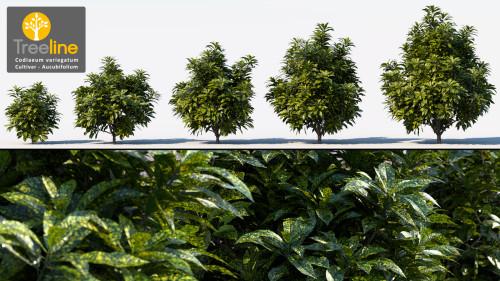 3dmk_Treeline_Codiaeum_variegatum_Aucubifolium_MPR