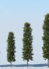 3dmk_Treeline_Syzygium-australe-Pinnacle_EPR2