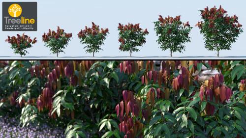 3dmk_Treeline_Syzygium-wilsonii-MPR